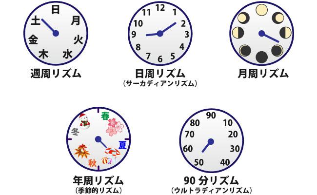 体内に時計が?!時間栄養学を理...